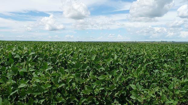 Monsanto und die Macht des Soja