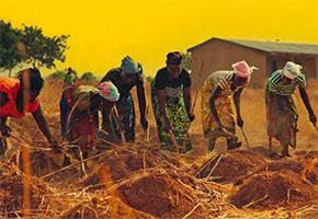 Die Allianz für eine Grüne Revolution in Afrika ist gescheitert