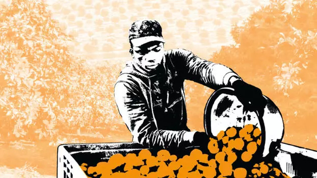 Bittere Orangen. Der Export von Zitrusfrüchten von Südafrika nach Deutschland